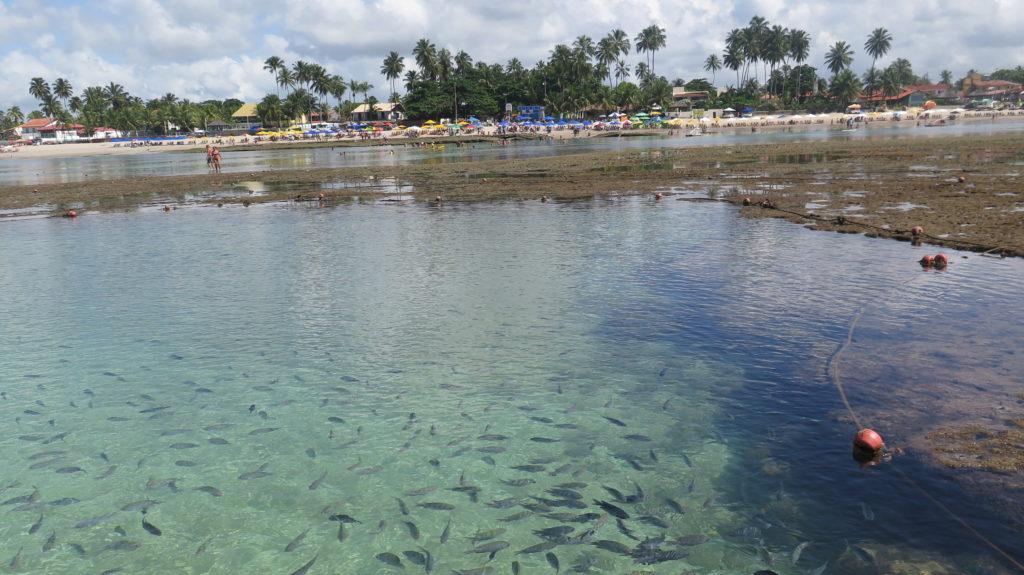 Peixes nas lindas piscinas naturais - foto Ana Paula Garrido
