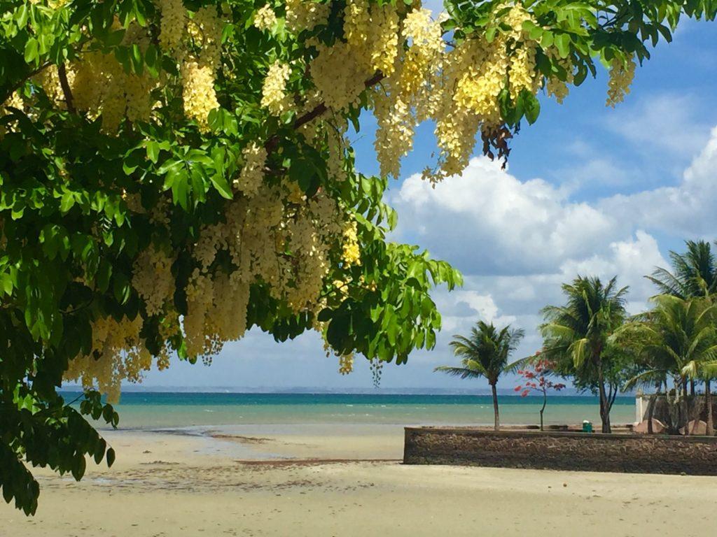 Ilha de Itaparica é pura beleza - foto Ana Paula Garrido